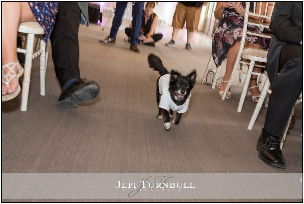 Dog Ring Bearer Compasses at Pattiswick
