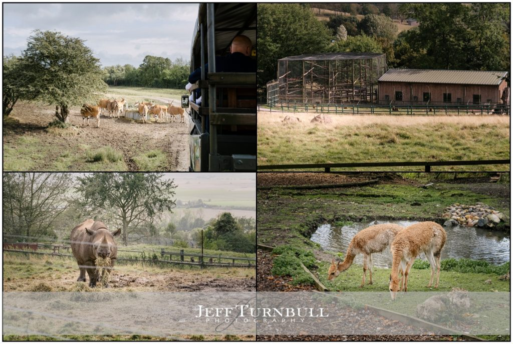 Animals at Lympne Hotel & Nature Reserve