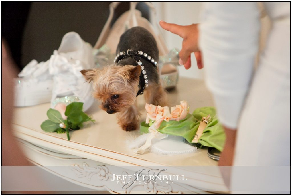 Yorkshire Terrier at Woodhall Manor