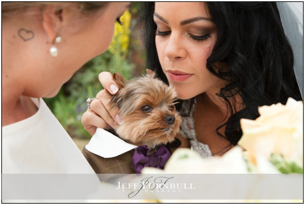 Bride holding Yorkshire Terrier
