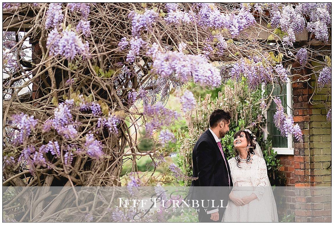 Colchester Castle Park wisteria tree
